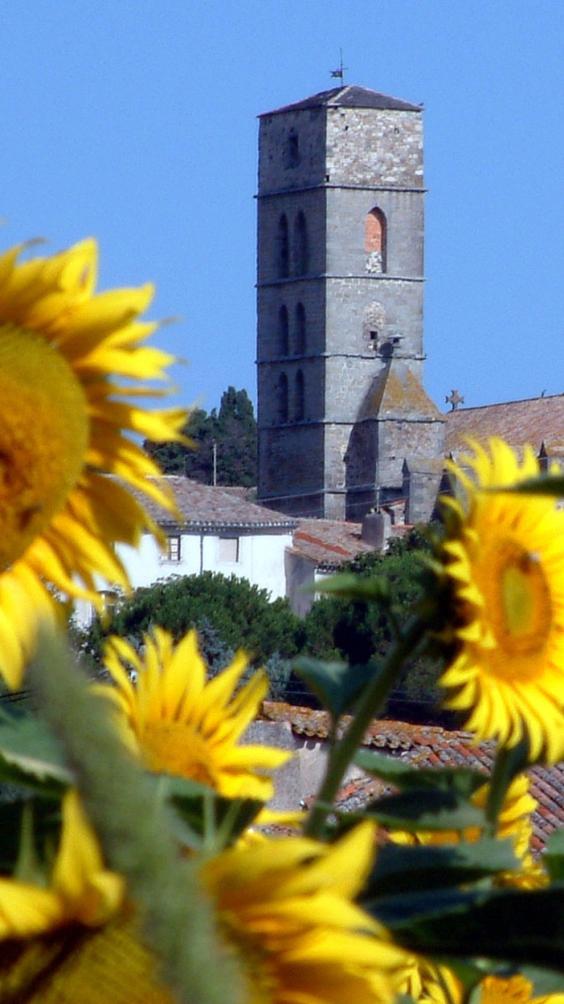 FRENCH SUNFLOWERS CHURCH pic